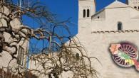 Cattedrale_MolfettaIPP-1140x500